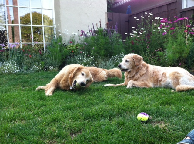 Wilson hanging with his sister Ruby