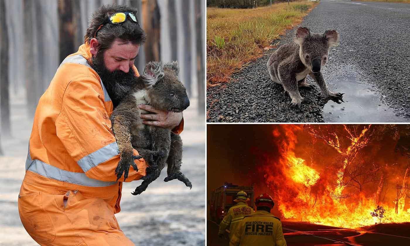 Save Koalas Extinction