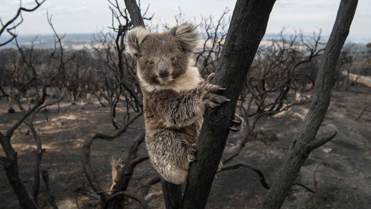 AUSTRALIA WILDFIRE FUND