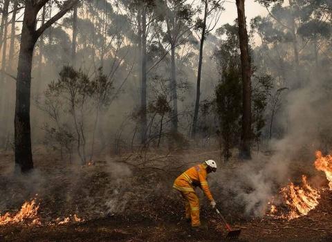 australia-wildfire-fund-(6)