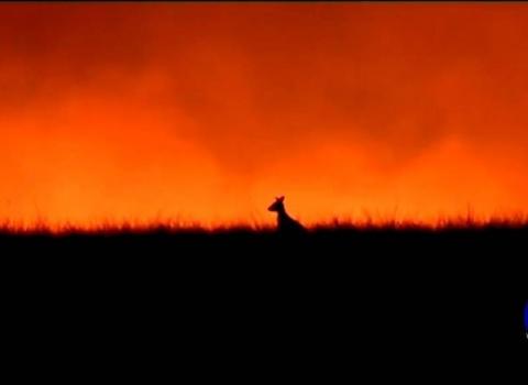 australia-wildfire-fund-(9)