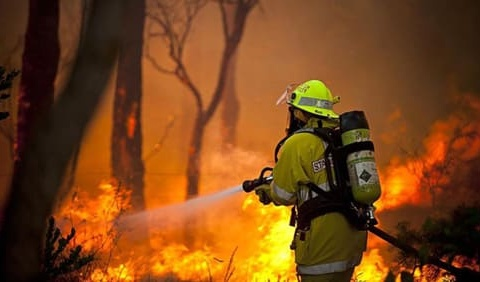 australia wildfire relief fund (10)