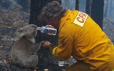 australia wildfire relief fund (14)
