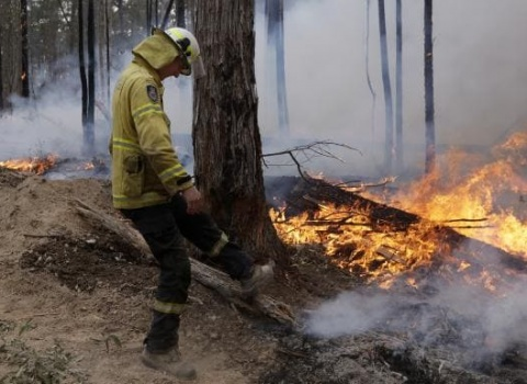 australia wildfire relief fund (4)