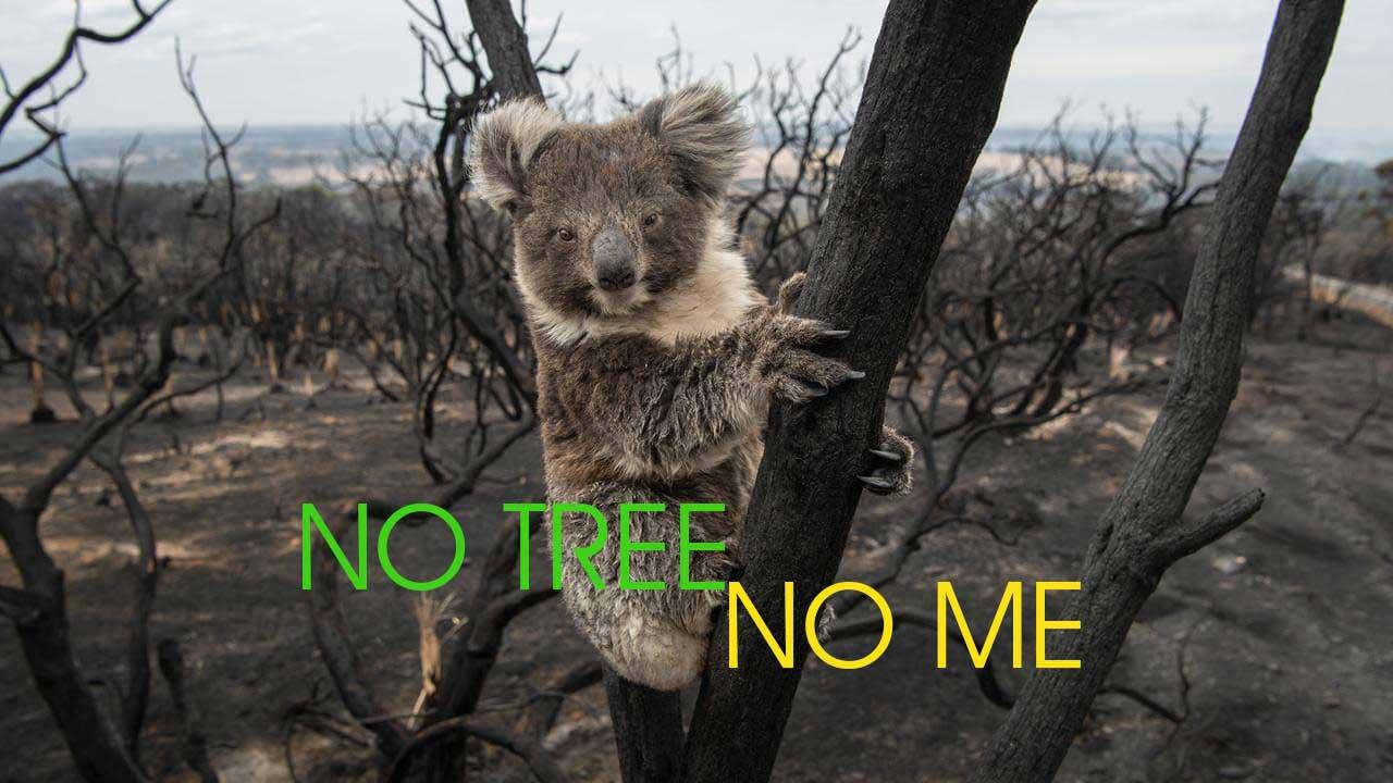 australia wildfire fundraising