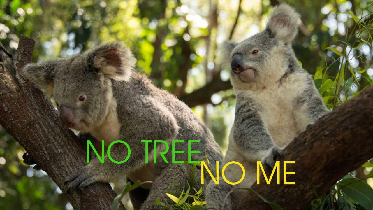 donate to australia bushfire relief funds