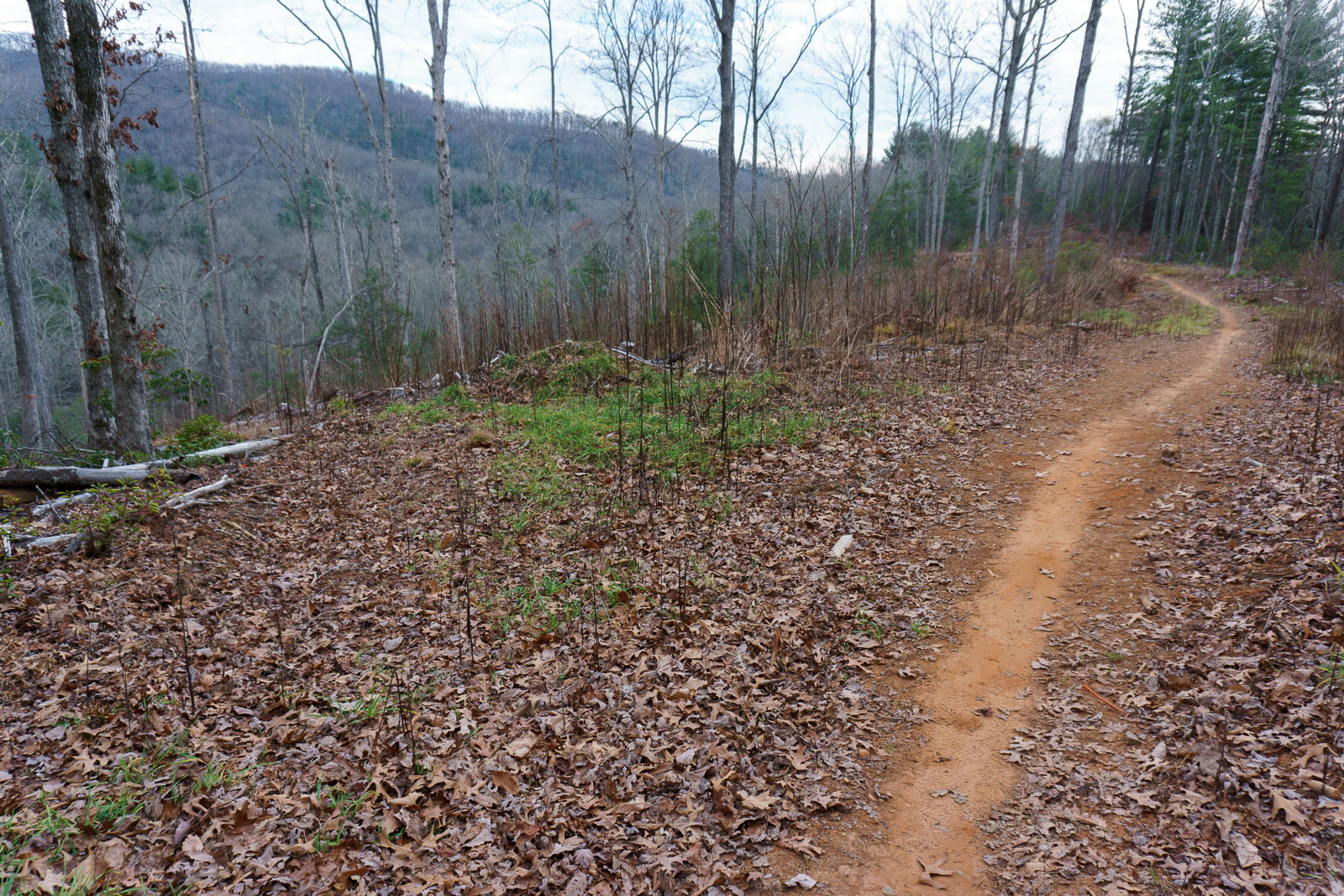 Timber Creek Camping Ground Forrest Trail