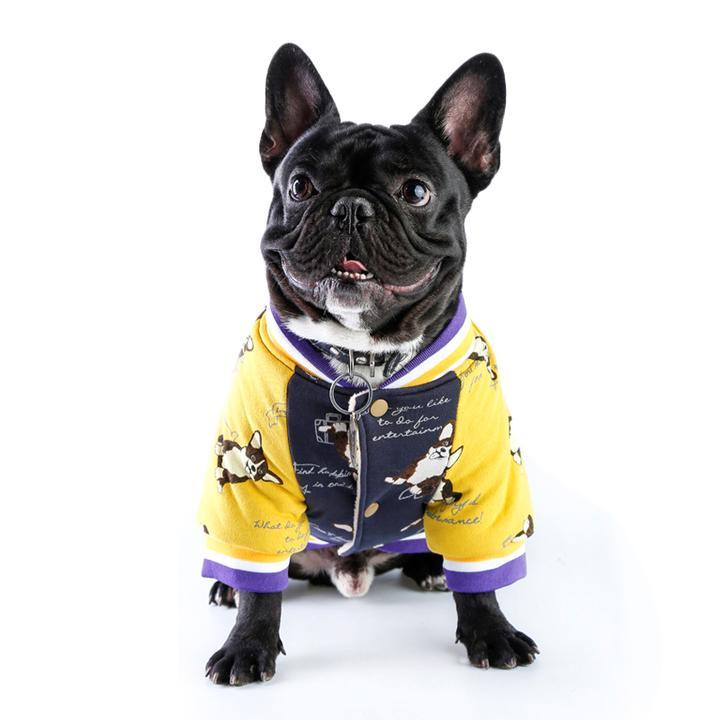 Do French Bulldogs Need Jackets?