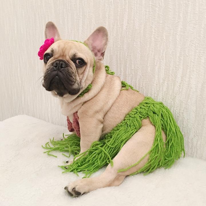 French Bulldog Costumes – Top 10 Picks
