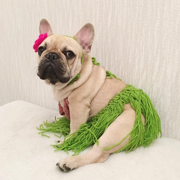 French Bulldog Costumes – Top 10 Picks
