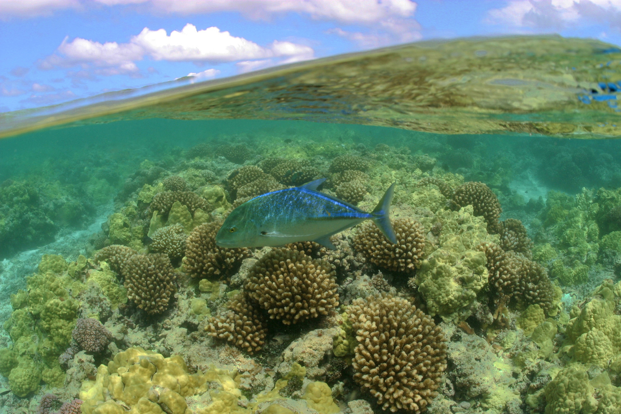 """President Obama quadrupled the size of the Papahānaumokuākea Marine National Monument off the coast of Hawaii, creating the world's largest marine protected area. When he declared National Oceans Month in June, he stated, """"Oceans and their nearby regions are also highly vulnerable to the effects of a changing climate -- a once-distant threat that is now very present and is affecting ecosystems and shoreline communities on every coast. Rising sea levels, coastal storms, and a growing risk of erosion and flooding are looming realities faced by seaside towns.""""(photo by James Watt)."""