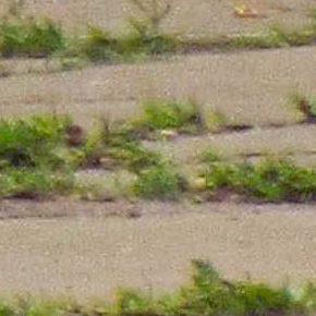The Green Sebring