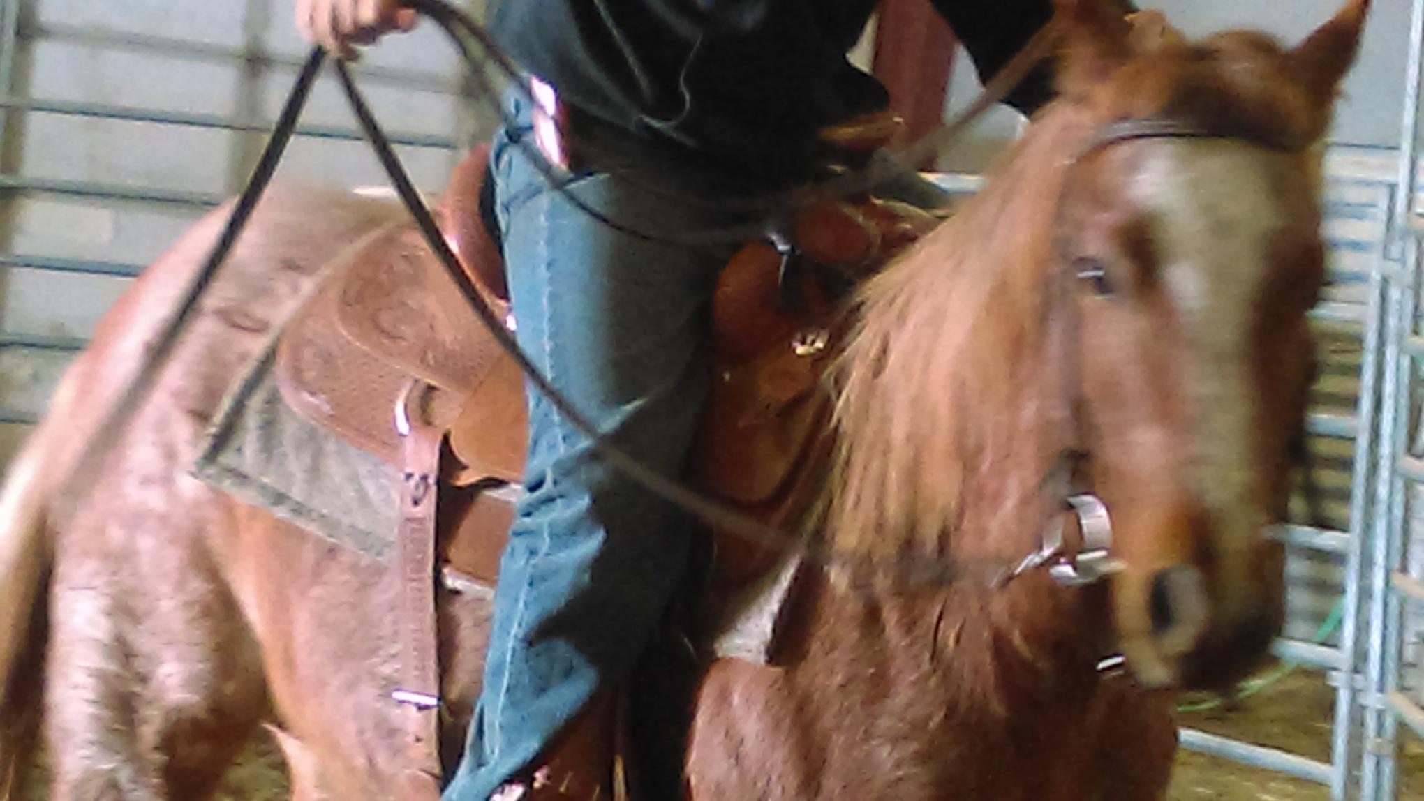 Bonina Colt Training Program is in Full Swing!