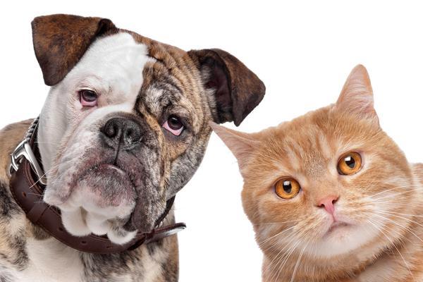 Healing Power of Pets