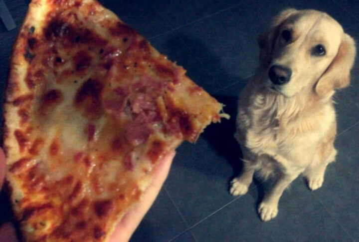 Dogs Eat Pepperoni