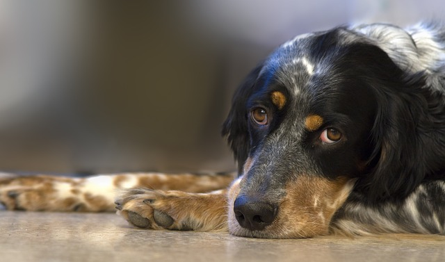 Dogs Headache