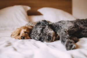 Putting a Dog to Sleep