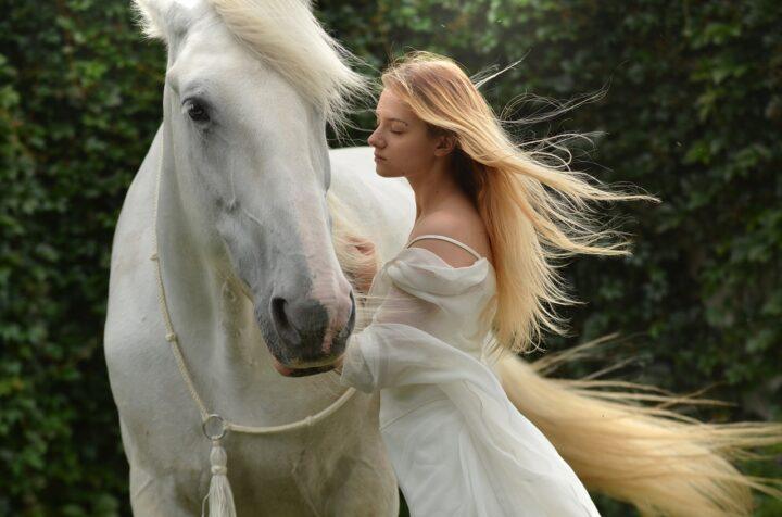 horse as pet