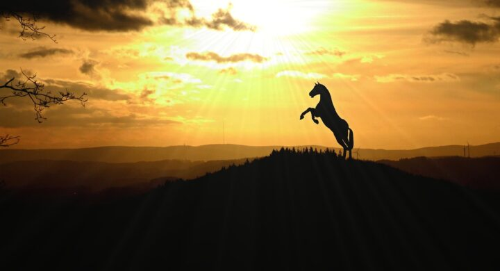 Rearing in Horses