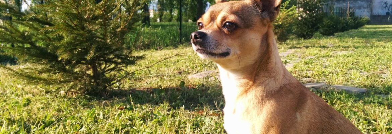 Install An Underground Dog Fence
