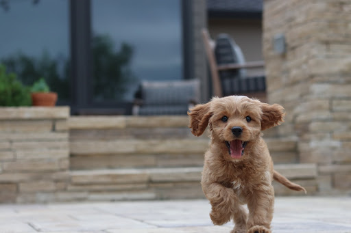 Pet-Friendly Holiday Destinations in Australia