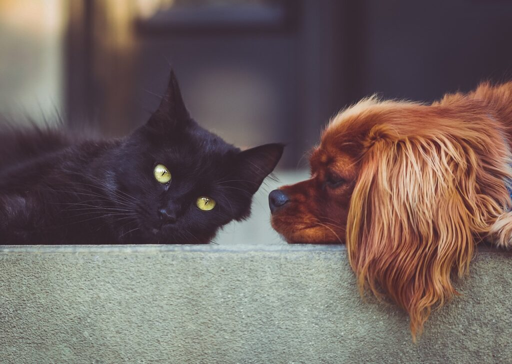CBD for Anxiety In Cats and Dogs