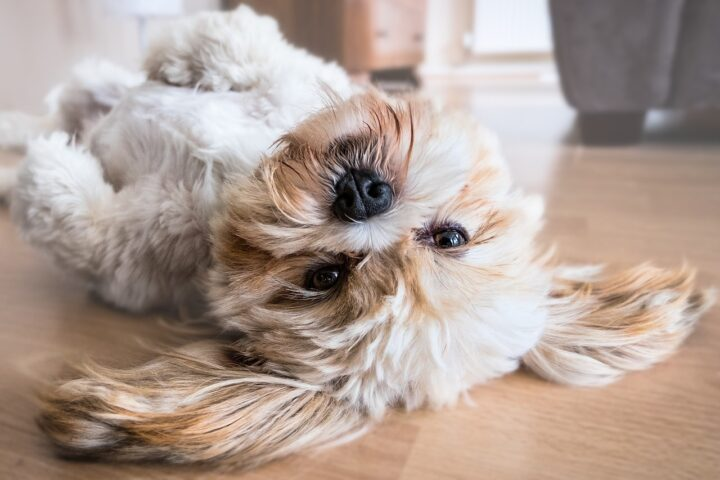 Cleaning Up Dog Hair