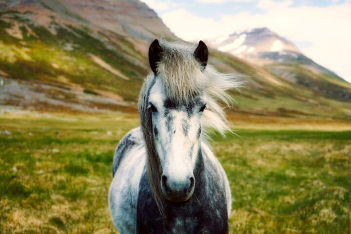 Protect Your Horse From Flies