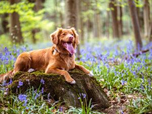 Maintaining Dogs Hygiene
