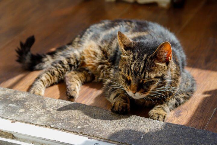 Ways to Improve Your Senior Cat's Life
