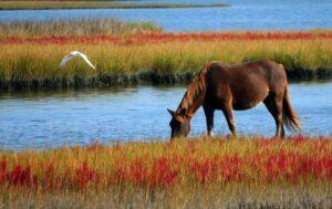 Are Horses Omnivores