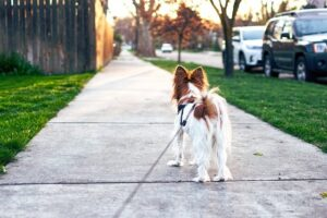 Dog Walking Gear