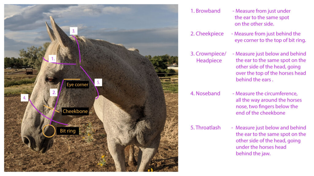 How to measure for a Gallant Gallop bridle