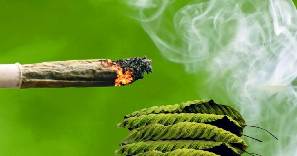Is It Possible to Smoke Kratom