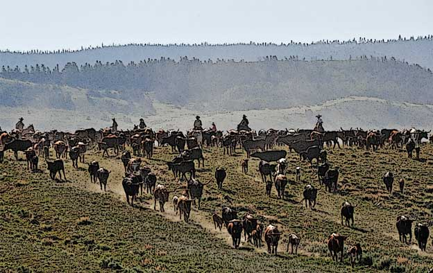 Prairie Legacy Heritage Criollo Cattle