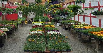Pletcher's wedding florals