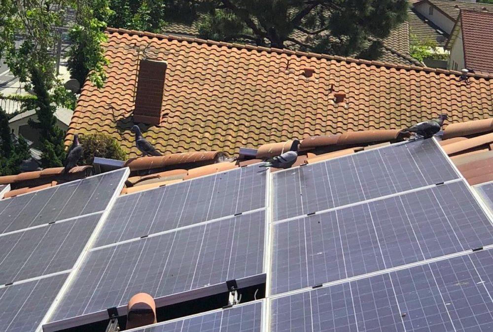 Ensure Birds Don't Nest on Your Solar Panels
