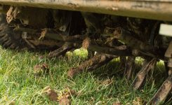 Getting the Most Out of Your Fall Fescue Lawn Renovation