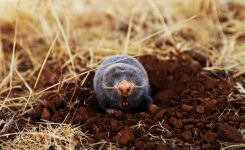 How Can I Get Rid of Moles in My Lawn?