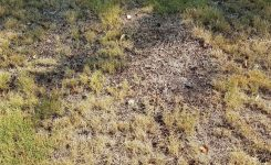 Should I Seed the Bare or Thin Spots in My Bermudagrass?