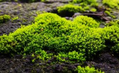 What Can I Do About Moss in My Yard?