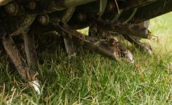 Why Aerate & Seed a Tall Fescue Lawn?