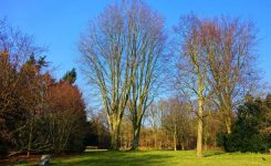 Two Things You Can Do in Late Winter for an Improved Summer Lawn