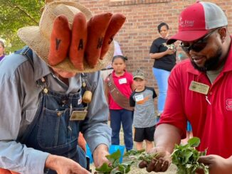 Yam Man Tiger Lovette and Cooperative Extension Director Dalton Dockery with some of the yam plants that have been loving nurtured by children since last spring. Judging of the junior yam farmers' work begins Friday night at the Tabor City Library (File photo)