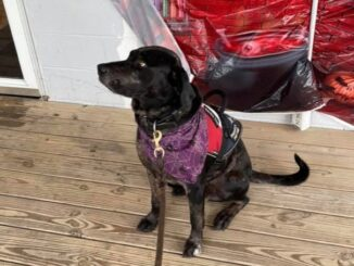 Nass' service dog, Trump, at on the porch of Gwen's Cafe in Hallsboro. (Alexandra Nass photo)