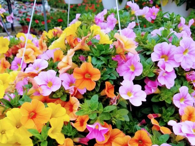 Photo of beautiful flowers