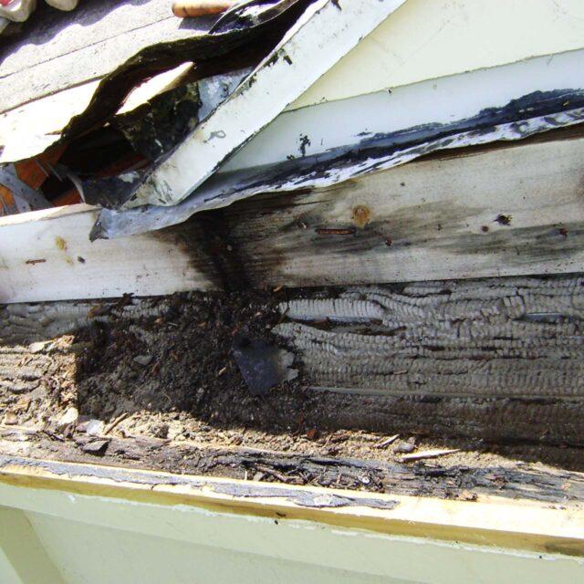 roof leaks repair fort lauderdale