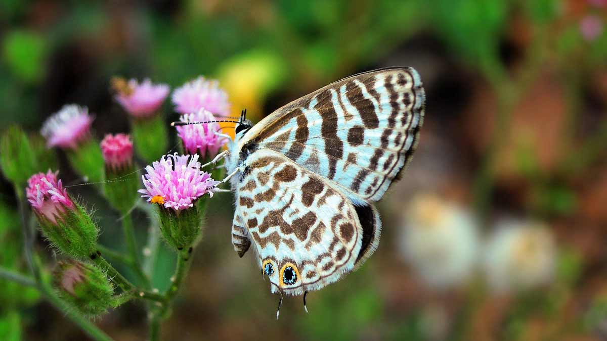 Take a Class to Do Reiki - blue butterfly on a pink flower