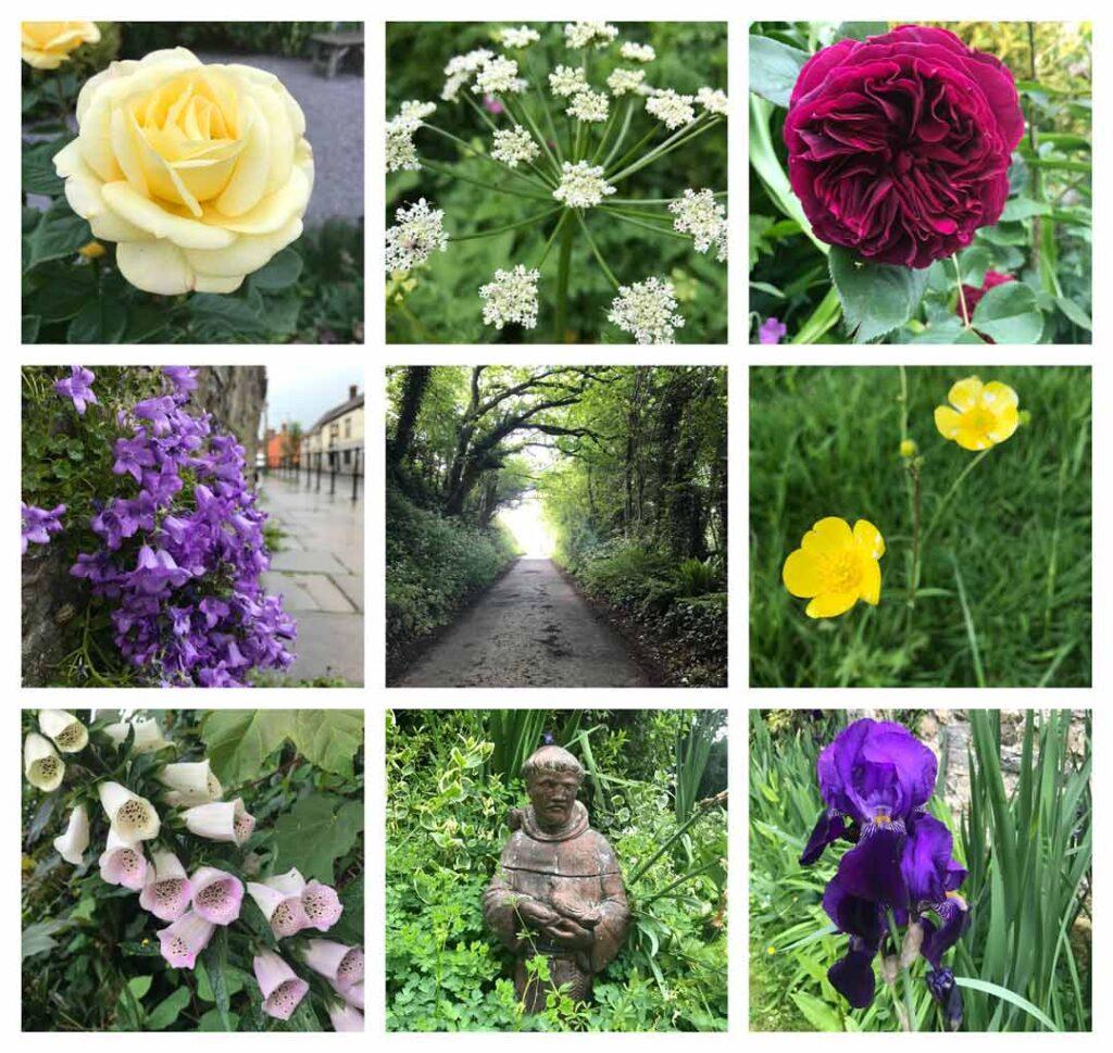 The Flowers of Glastonbury