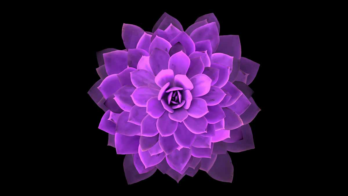 Image of purple cactus from directly above - Chicago Reiki